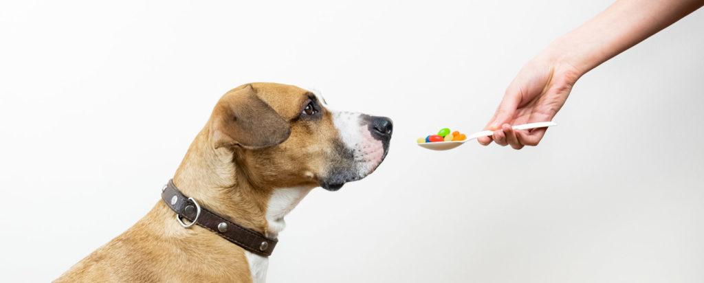 Ist CBD für aggressive Hunde der echte Deal?