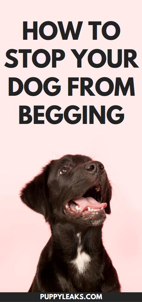 Einfache Methode, um Ihren Hund davon abzuhalten, um Futter zu betteln